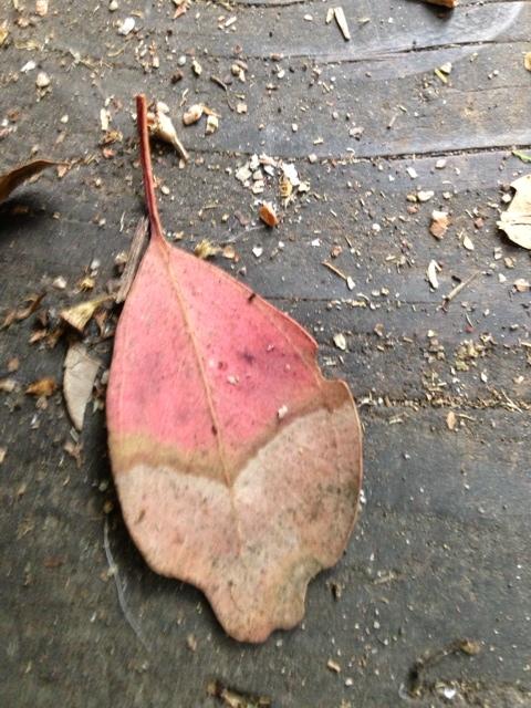 tree pink leaf