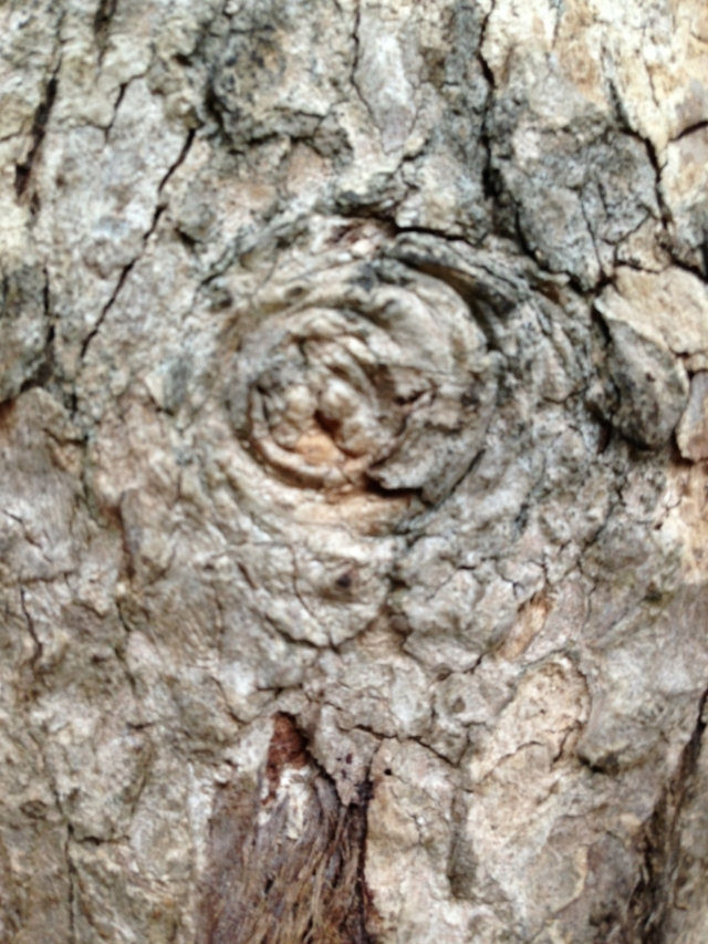 tree wise old knot